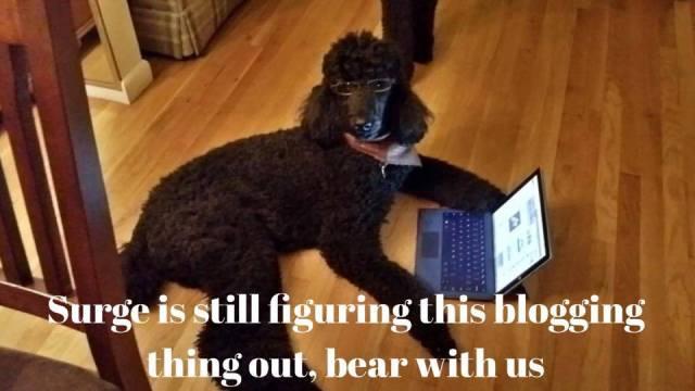 Surge blogging